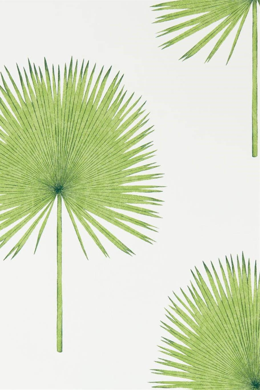 Sanderson Glasshouse Fan Palm Wallpaper DGLW216636