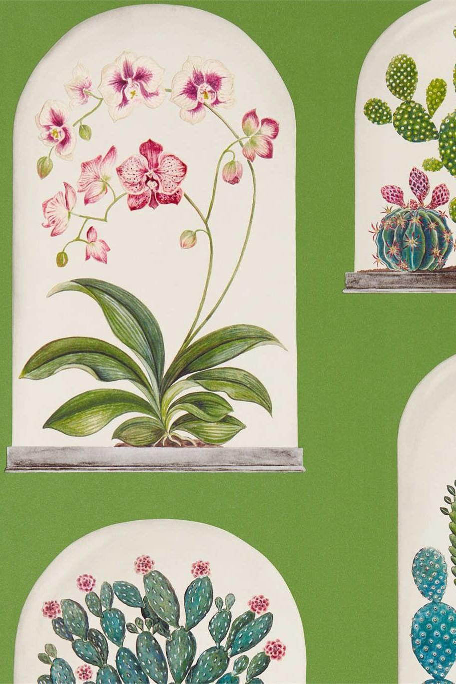 Sanderson Glasshouse Terrariums Wallpaper DGLW216656